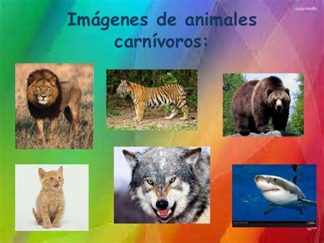 imagenes de animales herbivoros y carnivoros clasificaci 243 n de animales seg 250 n su alimentaci 243 n