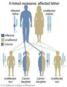 Red Green Color Blindness Inheritance Genetic Inheritance
