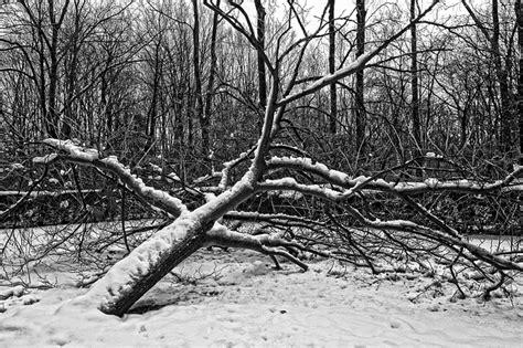 my neighbor s tree fell what happens if my neighbors tree falls in my yard steffey insurance
