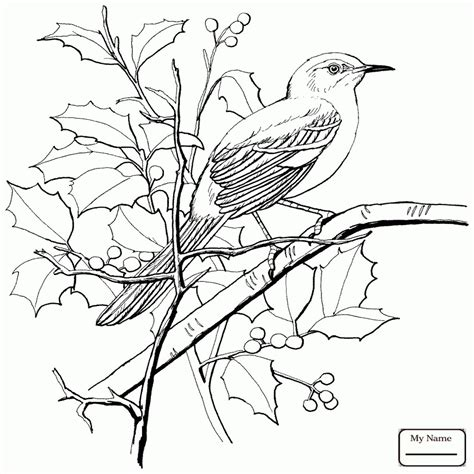 mockingbird coloring pages florida state bird mockingbird florida state bird