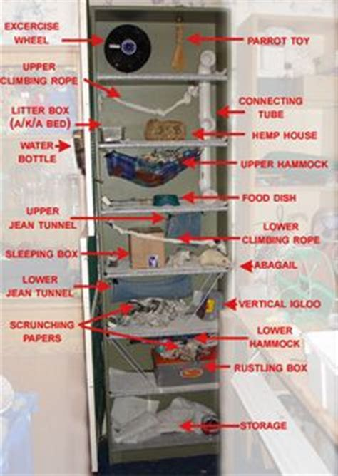 1000 images about rat cage ideas on rat cage