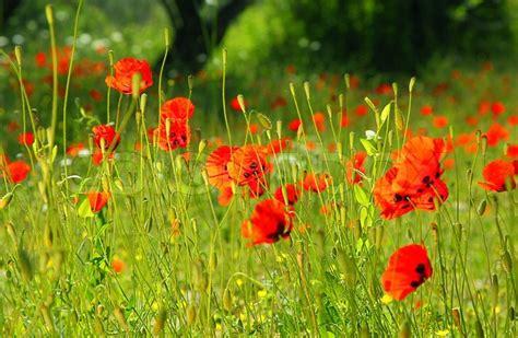 Herb Garden Box by Fresh Red Puppy Meadow Natural Spring Landscape Flower