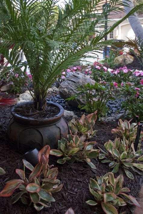 17 best images about plants on gardens tropical 17 best images about florida shade plants on