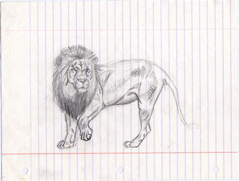 animal sketches artists archives pencil drawing collection