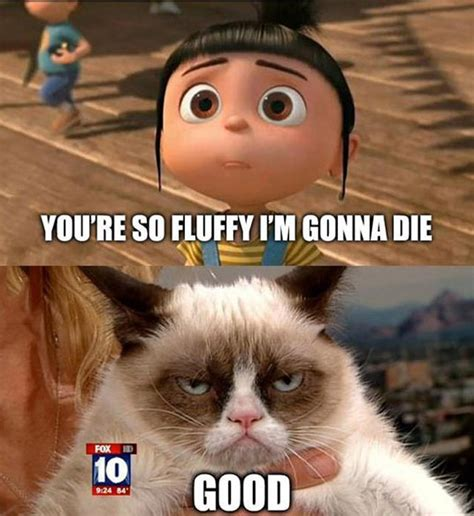 The Grumpy Cat Meme - tard the grumpy cat turns 1 year old leading to a world