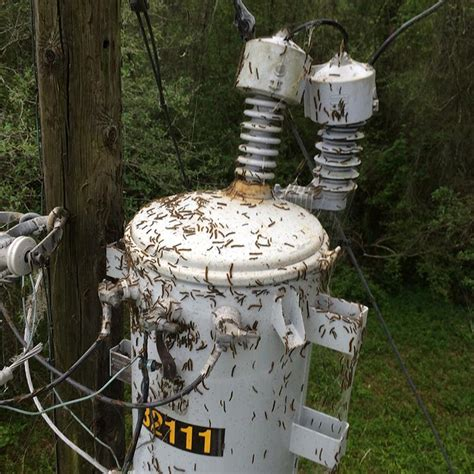 houston lighting and power outage tent caterpillars causing area power outages sam houston