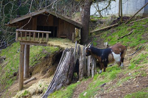 goat house coombs goat house by donna munro