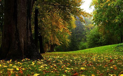 imagenes para pc naturaleza fondos de pantalla 1920x1200 bosques estaciones del a 241 o