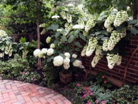 wit blad rode rand witte bloemen vijver struiken voor kleine tuin hydrocultuur planten