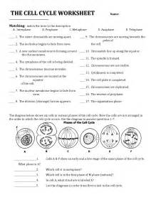 The Cell Cycle Coloring Worksheet » Home Design