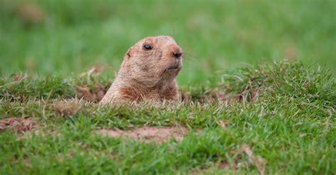 groundhog day vo does your faith feel like groundhog day david burchett