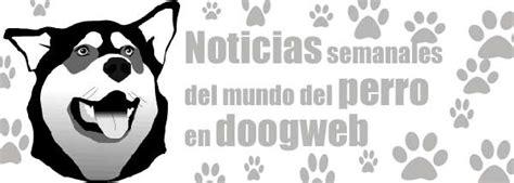 abotonada con un perro noticias de los mundos mundo noticias mundo perro 1 a 7 de abril www doogweb es
