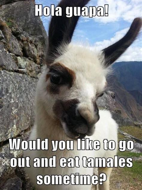 Flirty Memes - flirty llama know your meme