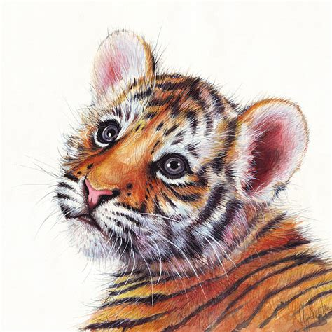 tiger cub watercolor painting painting by olga shvartsur