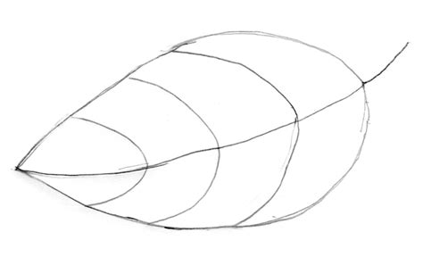 leaf pattern to trace leaf trace clipart best
