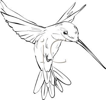 hummingbird outline tattoo hummingbird royalty free hummingbird clipart
