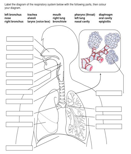 miller trailblazer engine diagram imageresizertool