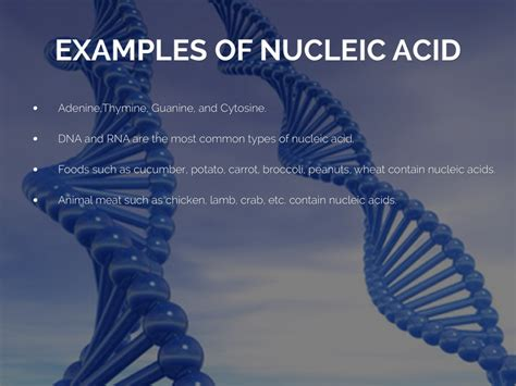 exle of nucleic acid macromolecules by alicyn crouch