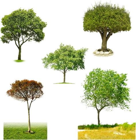 templates tree photoshop photoshop trees free psd download 101 free psd for