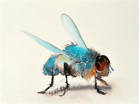 acrylic paint quizlet 222 best watercolor insects and butterflies images on