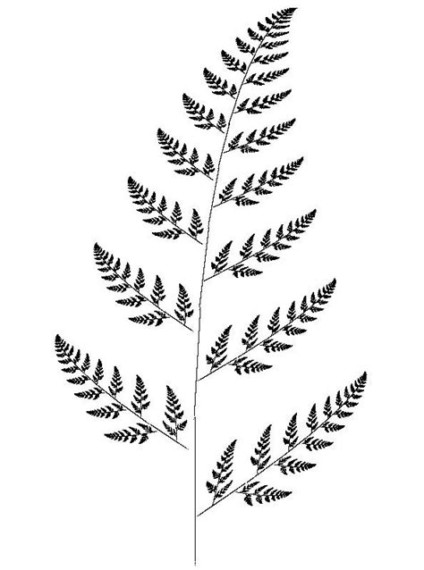 black and white fern drawing pictures to pin on pinterest