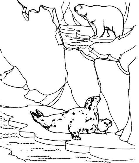 coloring pages arctic animals colouring pages arctic animals arctic fox coloring pages and