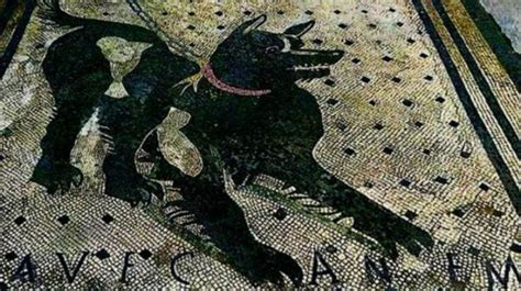 world famous pompeiis mosaic dog restored   display