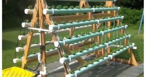 membuat hidroponik di rumah membuat rak hidroponik sendiri di rumah hidrafarm