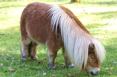 pony at lessons from a shetland pony story finding our way now
