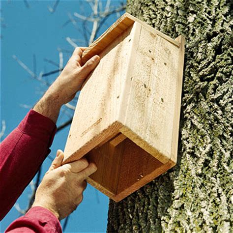 best 25 bat box ideas on pinterest bat box plans build