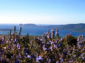 porto conte parco parco regionale di porto conte l area protetta