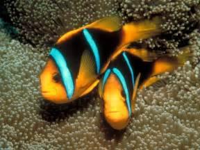 colorful tropical fish colorful tropical fish memes