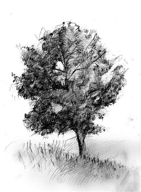 A Sketches Of Trees by Alone Tree Sketch By Doubleagent2005 On Deviantart