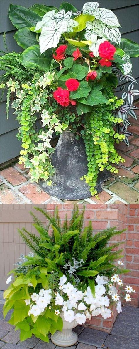 gallery  beautiful container garden ideas