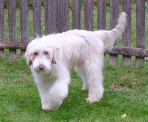 breeds large desktop large breeds images dowload