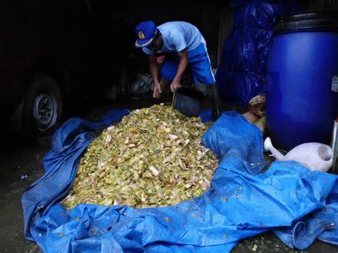 Farmentasi Pakan Ternak Tangguh Probiotik tangguh probiotik fermentasi pakan ternak