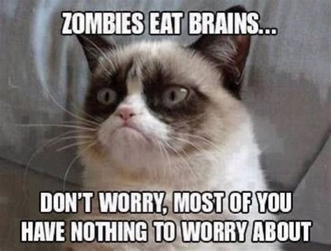 Mean Cat Meme - 1531 best grumpy cat images on pinterest grumpy cat