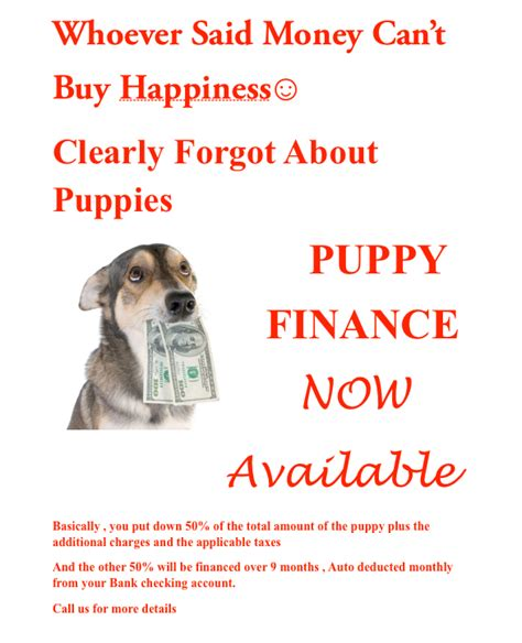 puppy financing puppy finance puppies and more