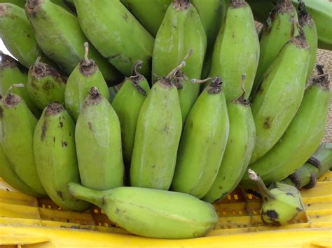 Pyx Banana green banana www pixshark images galleries with a