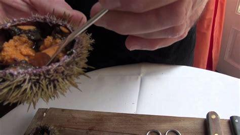 oursin cuisine technique de cuisine ouvrir un oursin plan 232 te qu 233 bec