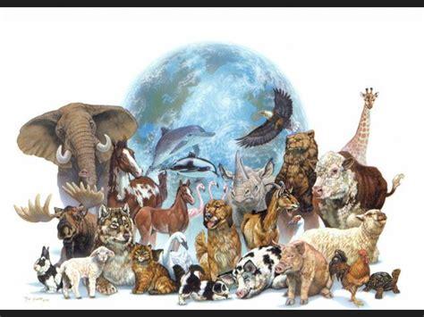 imagenes de animales hermosos del mundo ranking de los animales mas bonitos del mundo listas en