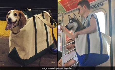 nyc dogs new york subway bans dogs unless they fit in a bag do these pups qualify