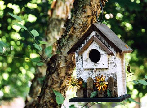 picture garden leaves bird house branch tree