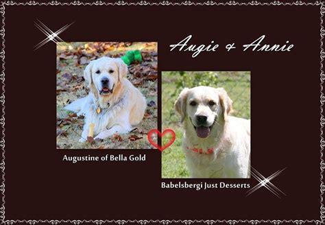 golden retriever puppies fayetteville ar golden retriever puppies for sale willowcross goldens