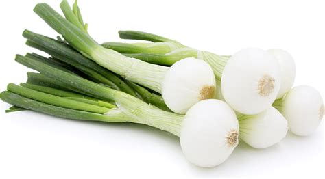 what is spring spring onions information recipes and facts