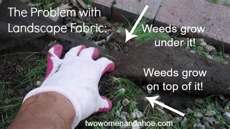 Landscape Fabric Prevent Weeds Landscape Fabric Barrier Cloth Does Not Work