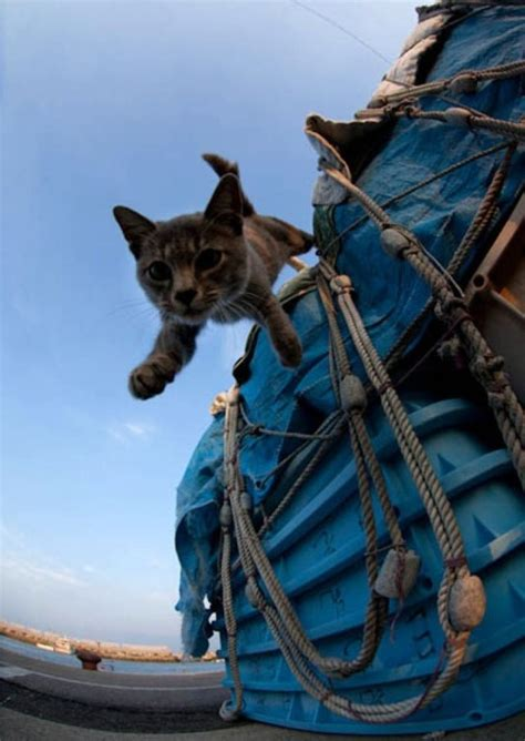 Cats make great sailors (26 photos) CLICK HERE - The Ocean