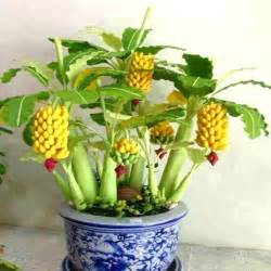 Buy A Planter banana plant flower reviews online shopping banana plant