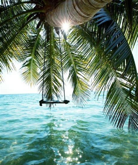 richtig einzigartige bilder von palmen