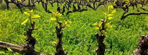 Bed And Breakfast Sonoma County Biodynamic Winery Tours In Sonoma County Sonoma Com